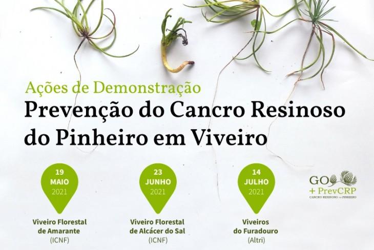 Prevenção do Cancro Resinoso do Pinheiro: Ações de Demonstração em viveiro