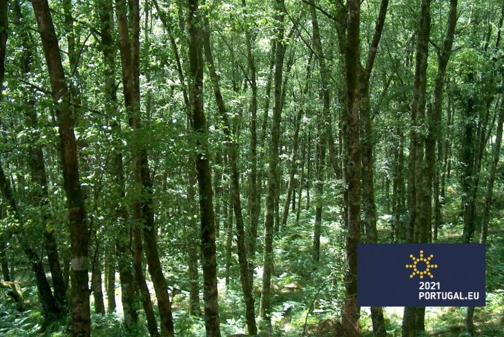 Forest Resilience - from policy to practice