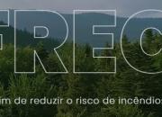Promoção do agrupamento de proprietários florestais