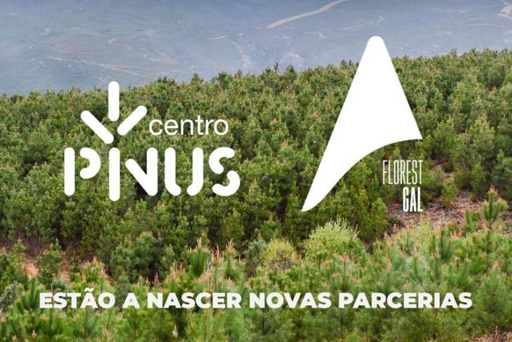Florestgal e Centro PINUS unem esforços por uma melhor floresta